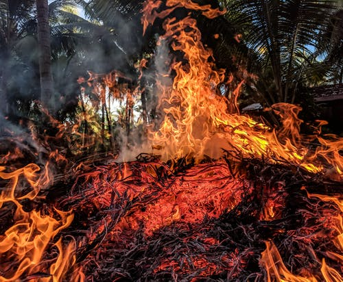 Wildfire Disaster Survival Guide